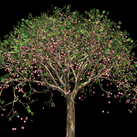 "GALLERY TALK | ""Of Trees and Life: Contemplating the Art of Jennifer Steinkamp"""